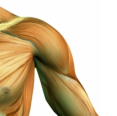 Physiotherapy for Shoulder & Upper Arm